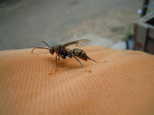 湖南蟑螂防治