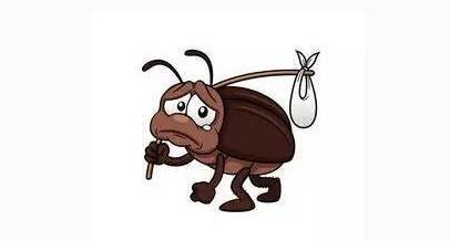 长沙蟑螂防治
