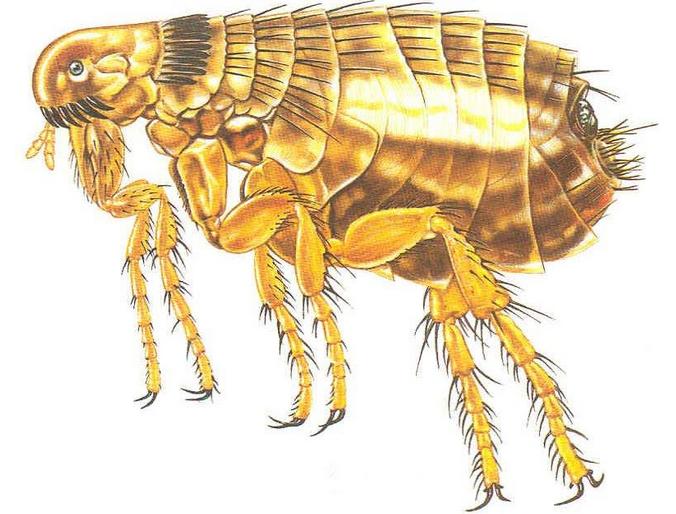 长沙害虫防治